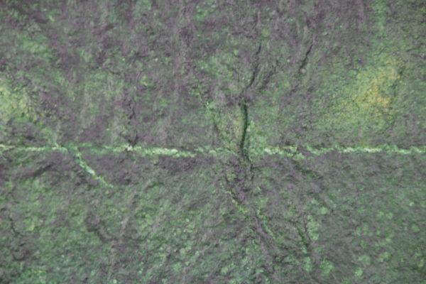 Algen Biofilm